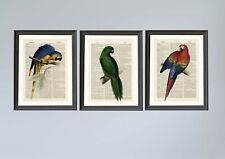 Set of 3 A4 Vintage Parrot Dictionary Page Art Prints Antique Book Page Art