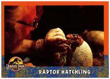 Raptor Hatchling #27 Jurassic Park 1993 Topps German Trade Card (C1271)