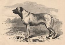 DOGS. Mr. Wallace's Turk 1881 old antique vintage print picture