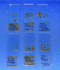 A rare antique set of entomological microscope slides, insects, 1929