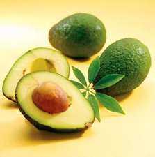 5Pcs Avocado Fruit Seeds Ordinary Kind Organic Tasty Salad Kitchen Eat