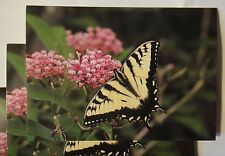 Butterfly greeting cards (PACK of 5) yellow swallowtail photo taken in CT USA
