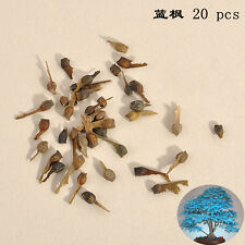 20pcs Japanese Maple Tree Bonsai Seeds Acer Palmatum Atropurpureum Home Plants F