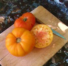 15 Graines Tomate Ananas Bio et Reproductibles