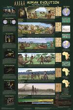 Human Evolution Laminated Educational Science Teachers Class Chart Poster 24x36
