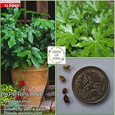 "10 JAPANESE FATSIA""PAPER PLANT"" SEEDS(Fatsia japonica); Drought tolerant"