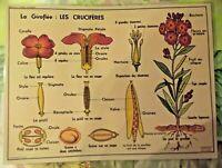 Objet de Métier Affiche Set de table Giroflée Crucifères Fleurs Graines Fruits