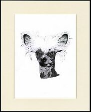 CHINESE CRESTED HEAD STUDY  LOVELY LITTLE DOG SKETCH  PRINT READY MOUNTED