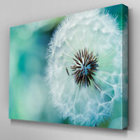 C191 Fluffy Dandelion White Canvas Wall Art Ready to Hang Picture Print