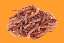 More details for 200 g wormery compost worms, fishing worms, oxford worms live bait, dendrobaena