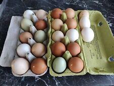 Bruteier🐣(keine) hatching eggs Araucana Vorwerk Maran Australorp 10+2 Hühner🥚O