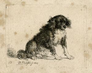 Rare Antique Print-ANIMAL-DOG-Plonski-1802