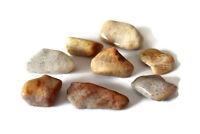 Stromatolite Fossil Natural Tumbled Stone Crystal Healing World Oldest Xlarge