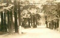Blithdale Avenue Redwoods Mil Valley 40s Marin RPPC Photo Postcard 20-3110