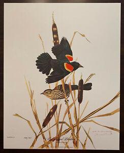 Wildlife Artist Jim Oliver Signed /750 Red Winged Blackbird 16x20 Art Print