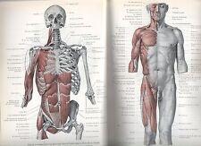 Vorm en beweging leerboek van het bewegingsapparaat van de mens Human Anatomy
