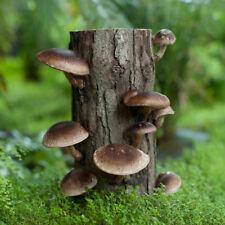25 Organic Shiitake Mushroom Plugs--Grow Mushrooms on Logs! Spores Spawn Kit