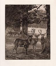 "WOW Heywood HARDY 1800s ORIGINAL Etching ""Dear in Windsor Great Park"" FRAMED COA"