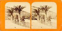 Francia Nice, Palmiers Del Wharf Massena, Foto Stereo Vintage Albumina Ca 1865