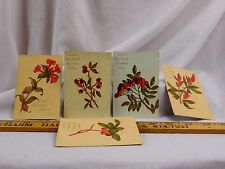 Lot of 5 Gordon's Dry Goods House Millinery Berries Wildflowers Nice Images F43