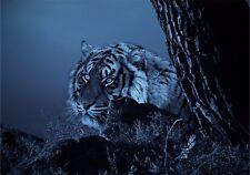Blue Tiger Brillante Pegatinas de Vinilo Coche Furgoneta Camión Taxi Camión amante de los Animales Gato Silvestre