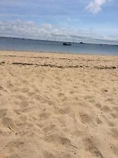 2 Cups of Authentic Cape Cod Provincetown Harbor Beach Sand
