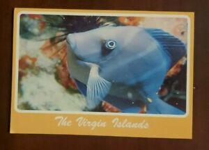 The Virgin Islands Pretty Blue Tang Fish Postcard
