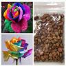 Multi-color Flower Seeds 200PCS Rainbow Rose Seeds Home Yard Garden Plant Decor