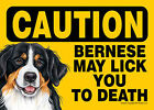 Bernese Mountain Dog Caution May Lick You To Death Dog Sign Magnet Hook & Loo...