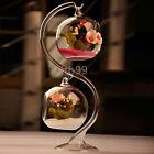 8cm Hanging Glass Flowers Plant Vase Stand Holder Terrarium Container IT