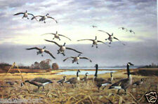 Canada Geese - Coming In by Maynard Reece