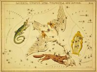 PAINTINGS DRAWING STAR MAP SWAN FOX LYRE CONSTELLATION ART POSTER PRINT LV3141