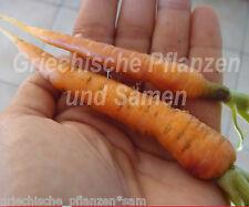 100 sulla coltivazione pentole circa Ø 8 CM sullabiodiversità degradabili 92009