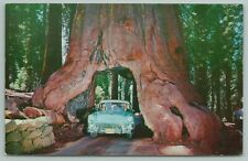 Yosemite Nat Park California~Drive Threw Famous Tree~Vintage Postcard
