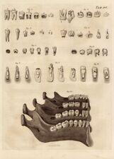 Antique dents anatomie tableau reproduction vintage dentaire Poster
