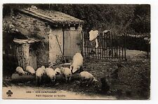 AGRICULTURE CAMPAGNE scenes de basse cour A LA FERME cochons au petit déjeuner