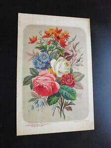 *Gravure couleur 19°botanique:fleurs:bouquet:le conseiller des dames et Dlles