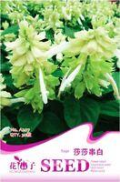 Original Package 30 White Sage Seeds Salvia Splendens Lamiaceae Seed Hot A207