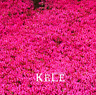 100 PCS Seeds Creeping Thyme Bonsai Flowers Rock Garden Walkways Plants 2019 New