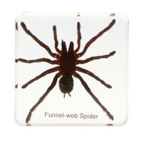 Real Tarantulas Insect Specimen Taxidermy Kids Educational Toy Home Decor