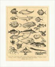 Ozeanbewohner Wain Fische Hummer Brasse Tiere Barsch Makrele Holzstich E 4492