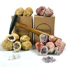 Combo Gift Pack -15 Whole Break Your Own Geodes - Large Purple Amethyst & Quartz