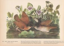 """1942 Vintage AUDUBON BIRDS #167 """"KEY WEST DOVES"""" KISSING Color Art Plate Litho"""