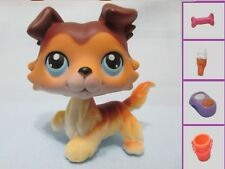 Littlest Pet Shop Dog Collie Sage Paw Up 58 Free Accessory Authentic Exclusive