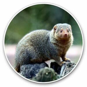 2 x Vinyl Stickers 20cm - Funny Mongoose Animal Cool Gift #16809