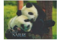 panda woods 3D Lenticular Holographic Stereoscopic Picture Wall Art