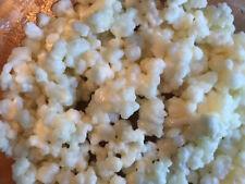 Grains de Kéfir de lait  - 25 grammes -