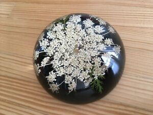 """W. Rolfe Dried Flower Vintage Resin Paperweight Queen Anne's Lace  3.5"""""""