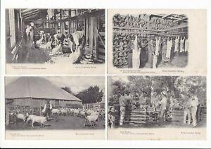 TWELVE 12 HISTORY of AUSTRALIAN MERINO Sheep KERRY Series 46 Set of 12 .