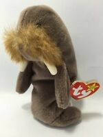 Jolly The Walrus Retired Ty Original Beanie Baby Stuffed Animal Plush 1996